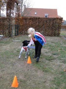 Puppy cursus in de praktijk