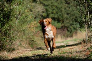 Daan van hondenschool Horen, Zien en Ruiken